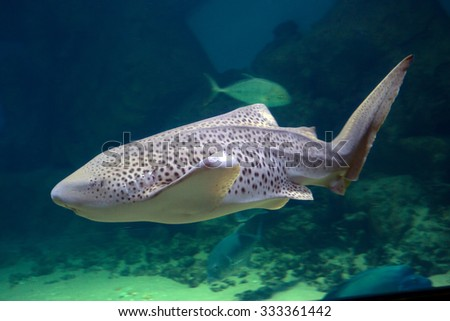 Leopard shark Leopard sharks occur in the Eastern Pacific ocean, in temperate-cool and warm-temperate waters.