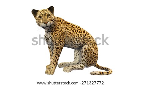 Leopard sitting, animal isolated on white background