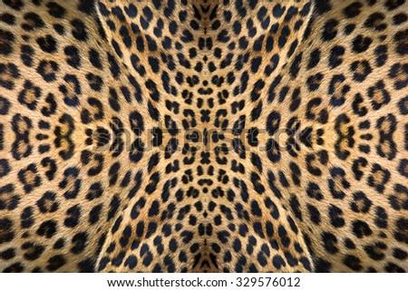 leopard skin texture. - stock photo