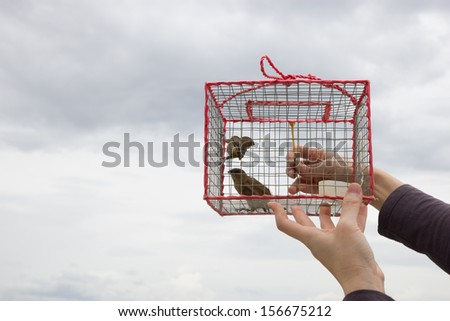 Let birds out of cage - stock photo
