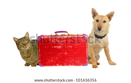 Let�´s Travel! Dog and cat with a suitcase. - stock photo