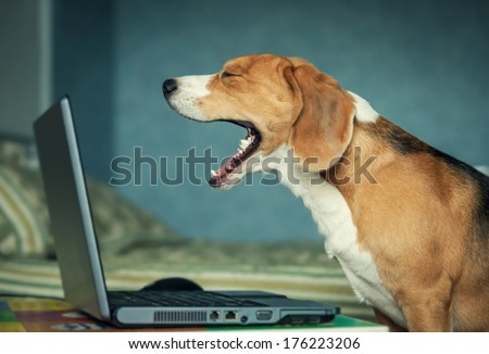 Lets finish our chatting , darling , I want to sleep - stock photo
