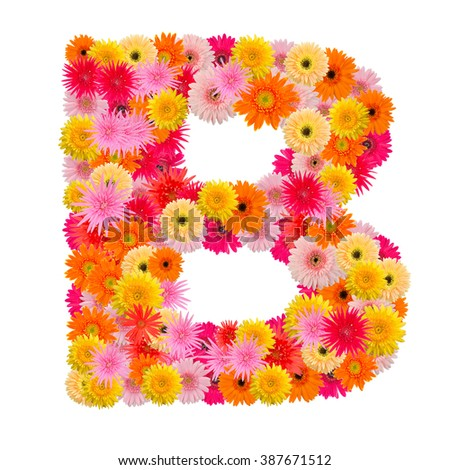 Letter B alphabet with gerbera  isolated on white background   - stock photo