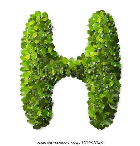 Letter H made of green leaves isolated on white