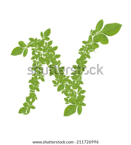 Letter N  alphabet of green leaves isolated on white background