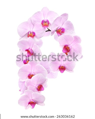 letter P from orchid flowers. isolated on white