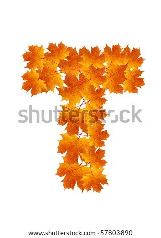 Letter T from orange autumn maple leaves - stock photo