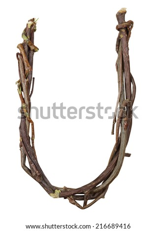 Letter U. Alphabet from the branches of birch are isolated on a white background. Wooden font. - stock photo