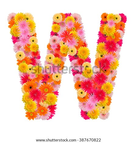 Letter W alphabet with gerbera  isolated on white background   - stock photo