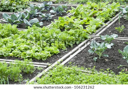 Lettuce and different other vegetables in a vegetable garden - stock photo