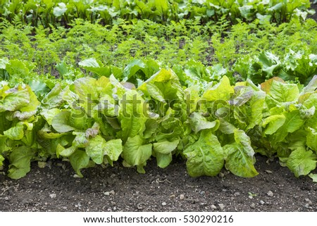 Vegetables Growing Stock Images Royalty Free Images Vectors