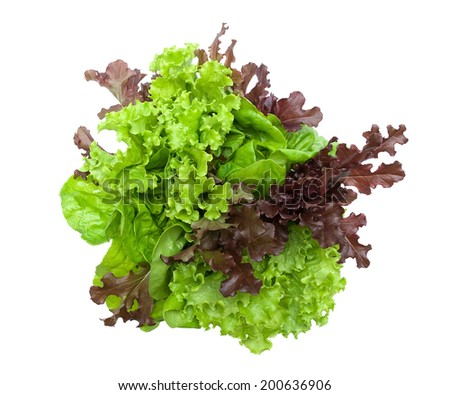 lettuce different varieties isolated on white background. horizontal photo - top view. - stock photo