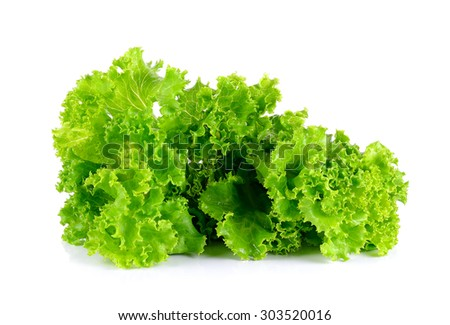 Lettuce isolated on the white background . - stock photo