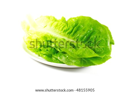 Lettuce Leaves Isolated on a White Background - stock photo