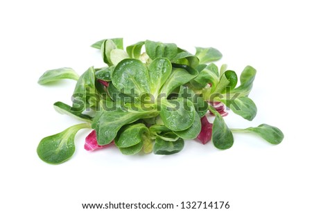 Lettuce leaves on a white background - stock photo