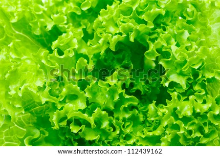 Lettuce salad, fragment. Abstract background. - stock photo