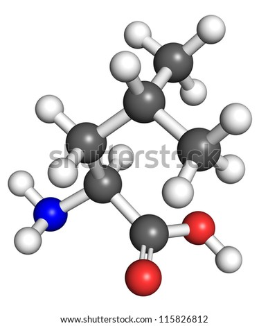 Leucine (amino acid) molecule, ball and stick model. Atoms colored according to convention. - stock photo