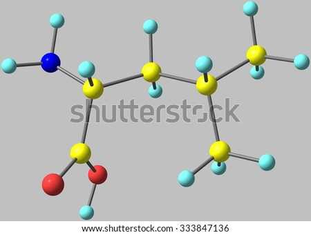Leucine, Leu, is a branched-chain alpha-amino acid, classified hydrophobic due to the isobutyl side chain