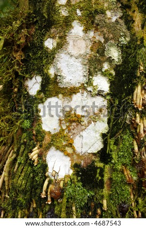 Lichen and moss on a palm trunk