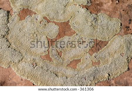 Lichen on a Desert Rock - stock photo
