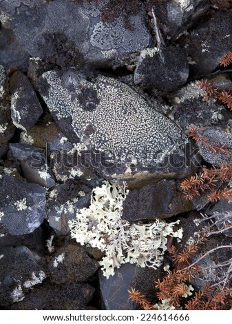 Lichens on rock in high elevation mountains