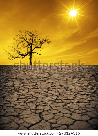 Life ecology solitude concept - lonely dry dead tree on cracked earth in desert with crack land texture soil against sky with sun ray Empty concept space for inscription Idea of bad disaster in nature - stock photo