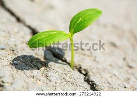 Life, growing, grass. - stock photo