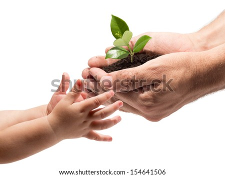 life in your hands - plant whit white background - stock photo