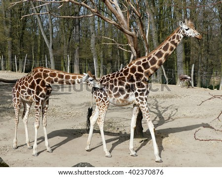 life in zoo - stock photo