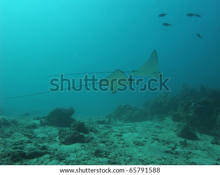 life of sea background - stock photo
