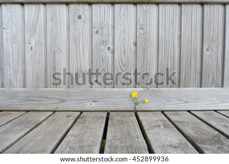 Life on the wood with small yellow flower. - stock photo
