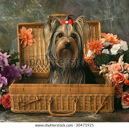 life with a dog sitting  in a wattle case - stock photo