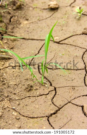 life with drought which is one of the disaster to biology - stock photo