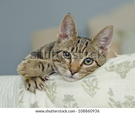 Lifestyle portrait of young kitten at home - stock photo