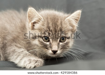 Lifestyle portrait of young kitten at home