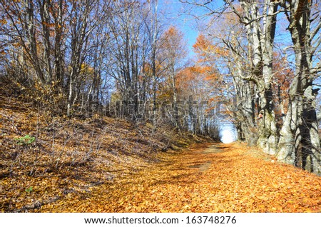 light at the end of the autumn forrest tunnel road, wide angle - stock photo