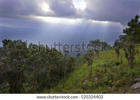 Light beams penetrate through cloud from sky over a forest