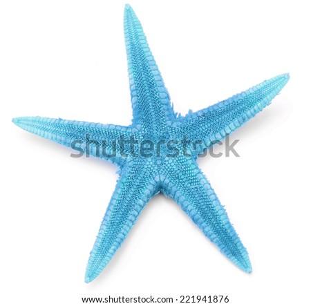 Light blue seastar, isolated on white background. - stock photo