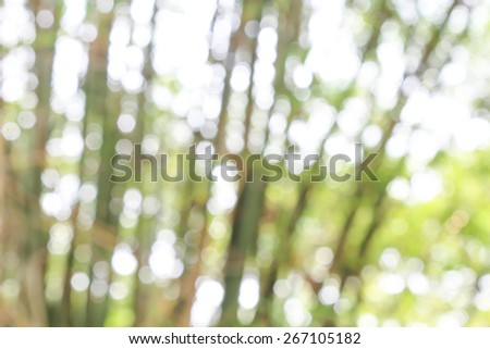 Light bokeh under the shadow of Bamboo. - stock photo