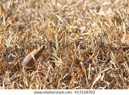 light brown dried grass straw earth floor outdoor under sunlight on a warm sunny day  - stock photo