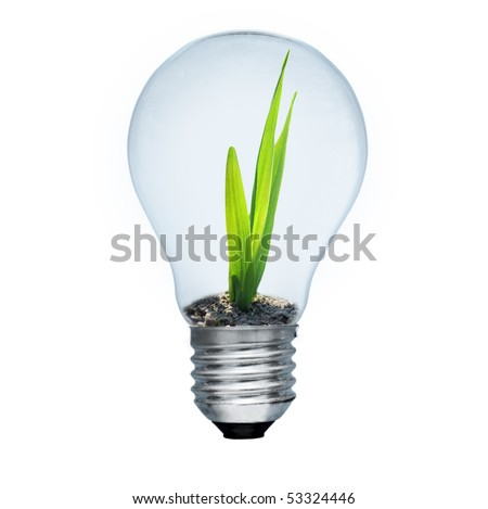 Light bulb and green sprout inside. Saving energy concept. Image isolated on white - stock photo