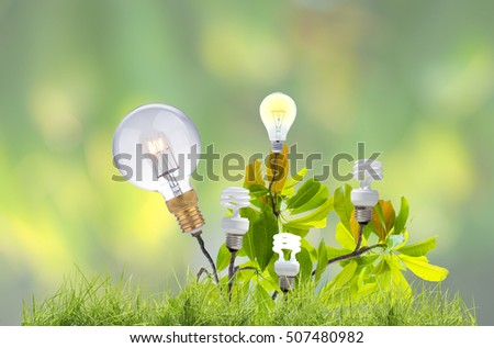 light bulb glowing on Pong-pong or Othalanga tree with leaves on nature background, go green concept