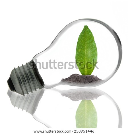 light bulb, green leaf inside isolated on white background