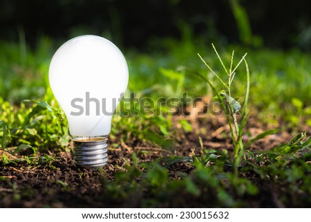 Light bulb growing on the ground in the garden - stock photo