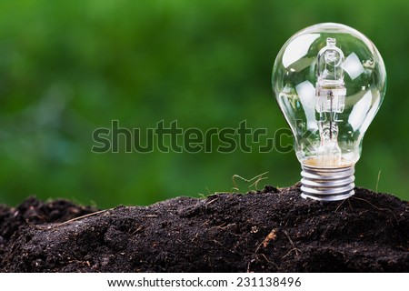 Light bulb plant in soil as idea or energy concept - stock photo