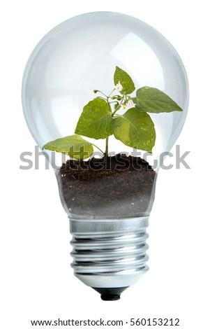 Light bulb with beautiful green plant inside isolated on white background.The concept of ecology.