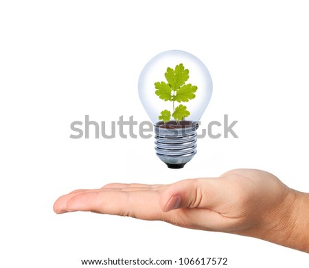 Light bulb with leaves above palm.