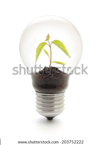 Light bulb with plant inside on white background