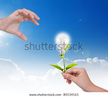 Light bulb with small plant  in hand - stock photo