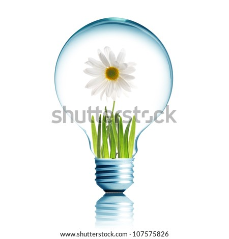 Light Bulb with soil and white flower plant inside - stock photo